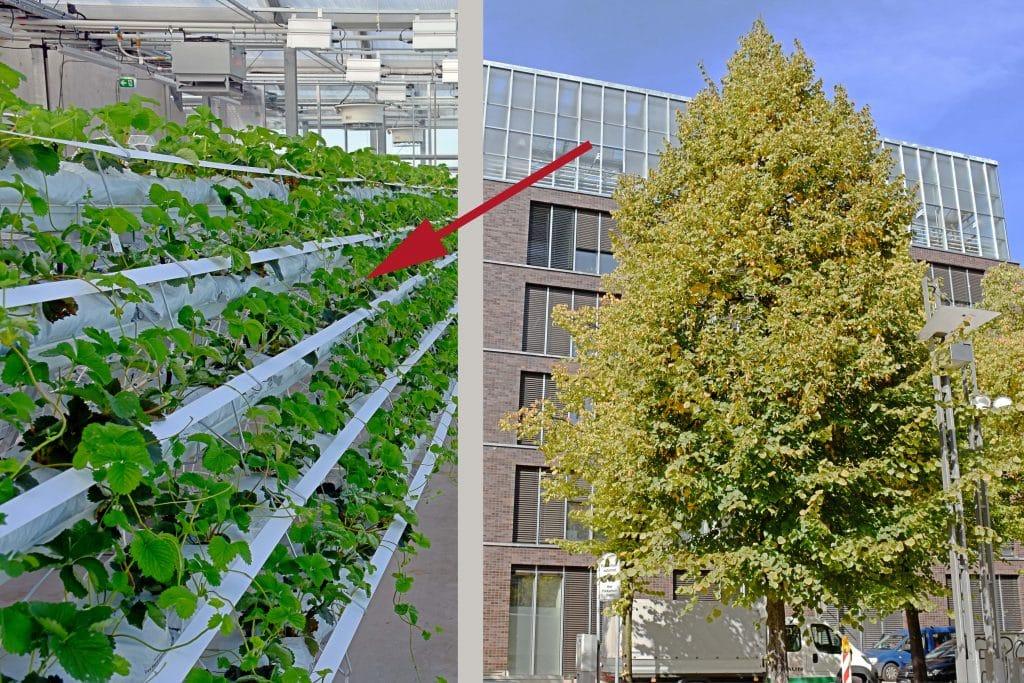 Gewächshaus auf dem Flachdach des Jobcenters Oberhausen mit Flachdachabdichtung von Binné